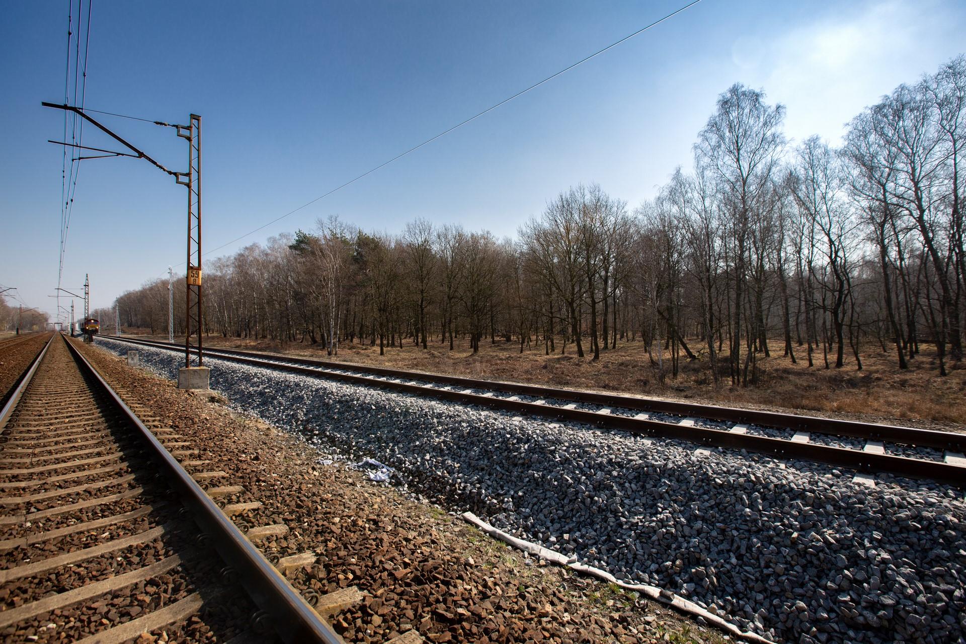 Obrazek: świerzo wyremontowane tory na tle wczesnowiosennego lasu